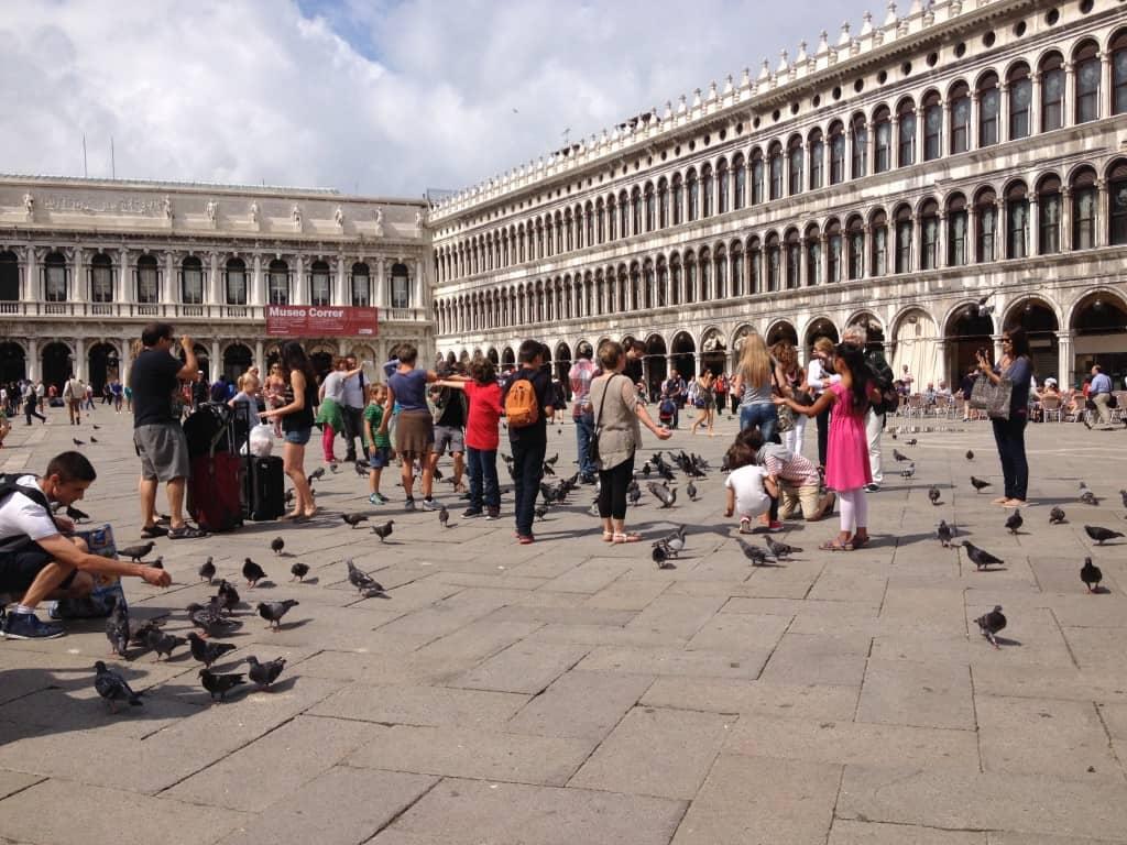 On nourrit les pigeons