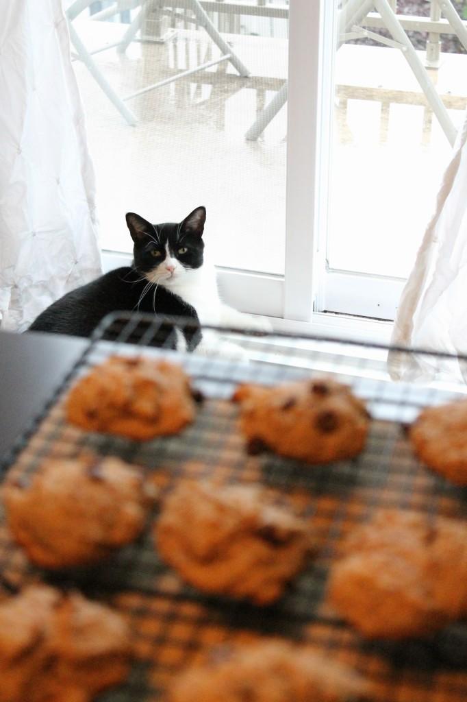 biscuits aux brisures de chocolat, végane et sans farine