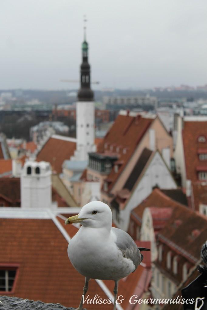 Vue d'oiseau sur Tallinn, Estonie