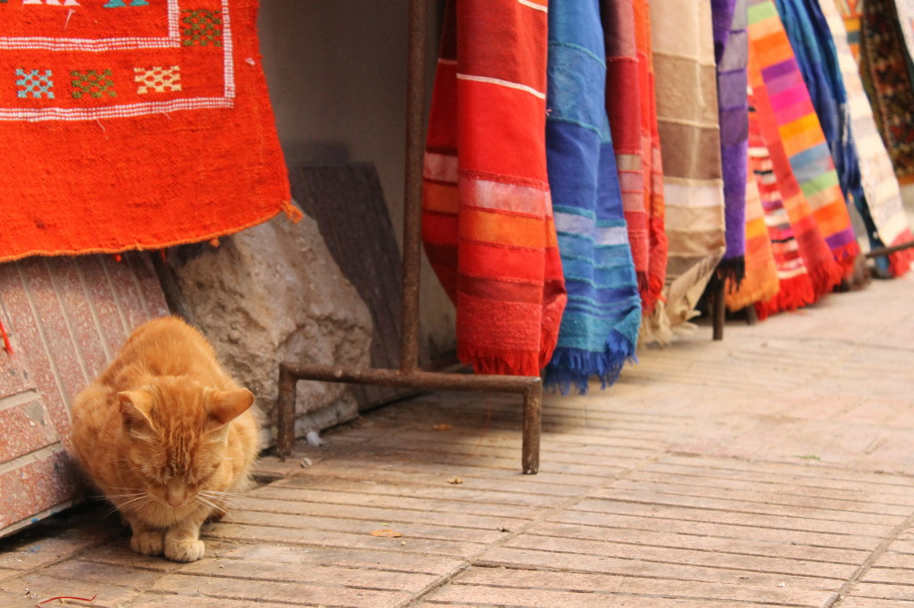 bébé chat à Essaouira
