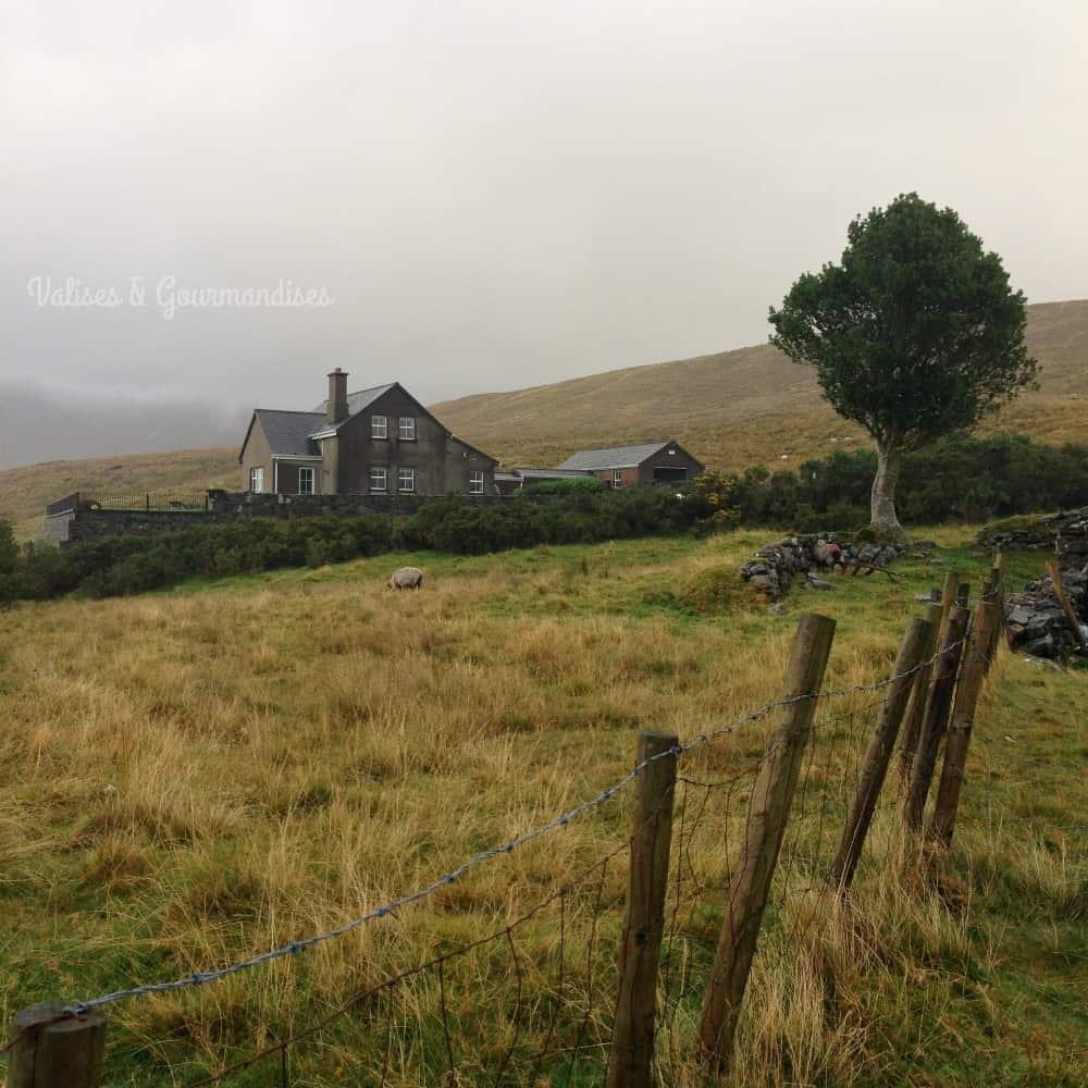 Découvrez les paysages enchanteurs du comté de Galway