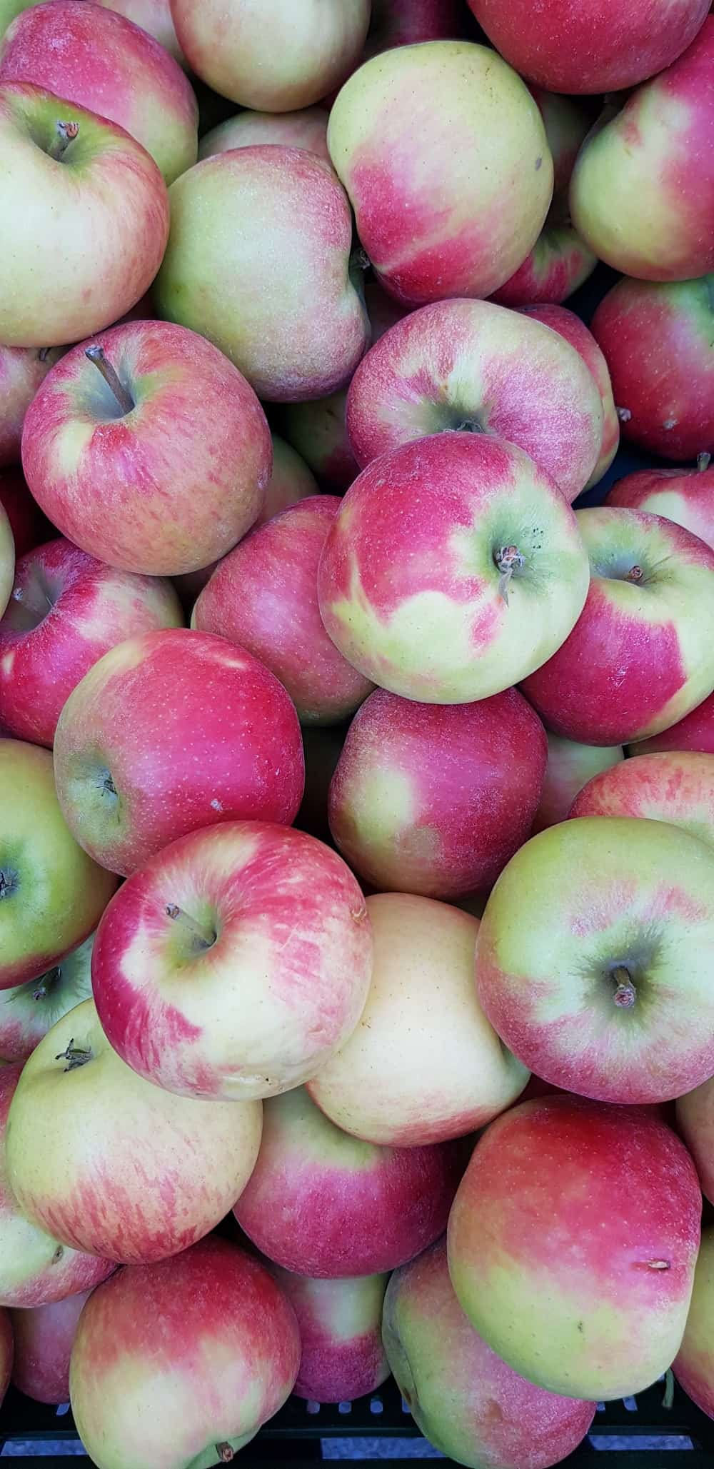 zoom on apples at the market