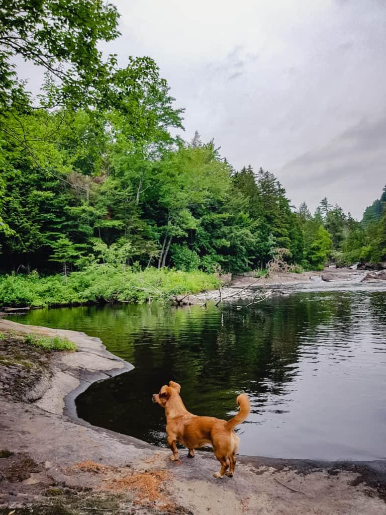 croquette sur le bord d'un lac