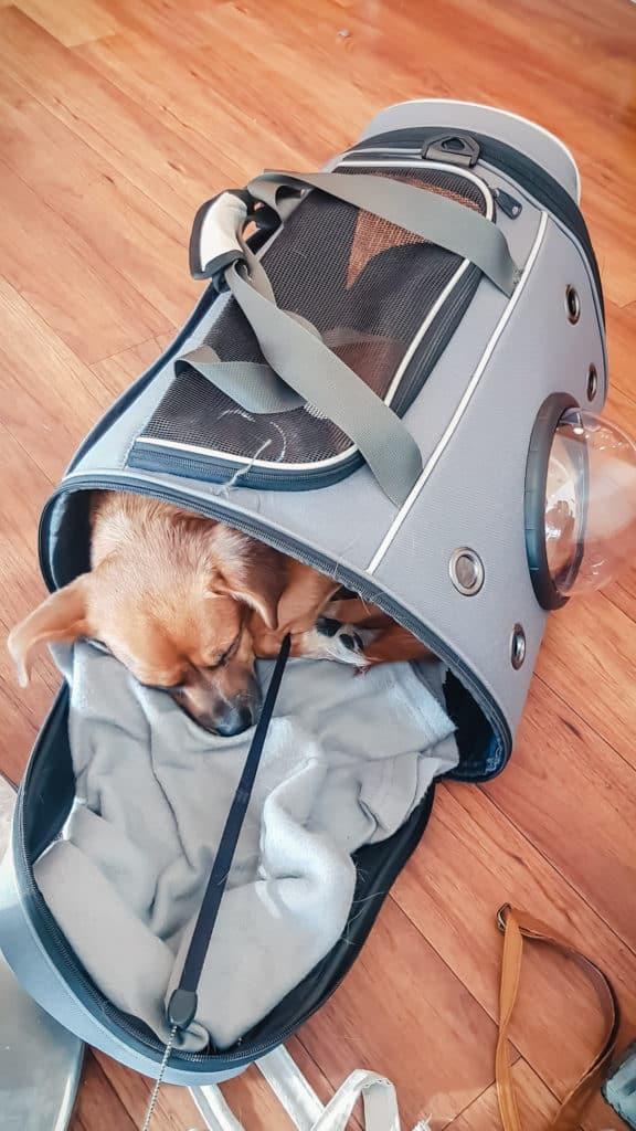 Croquette dans son sac de transport