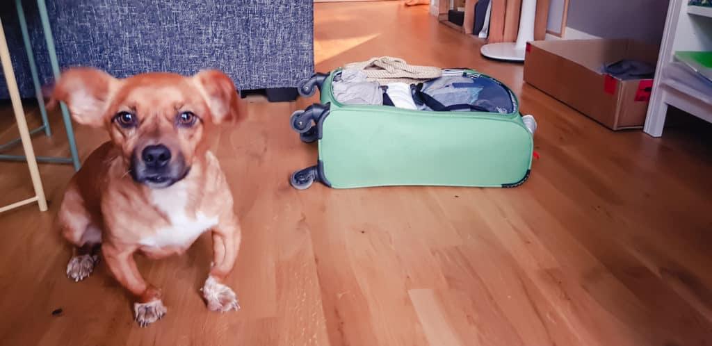 Croquette et valise